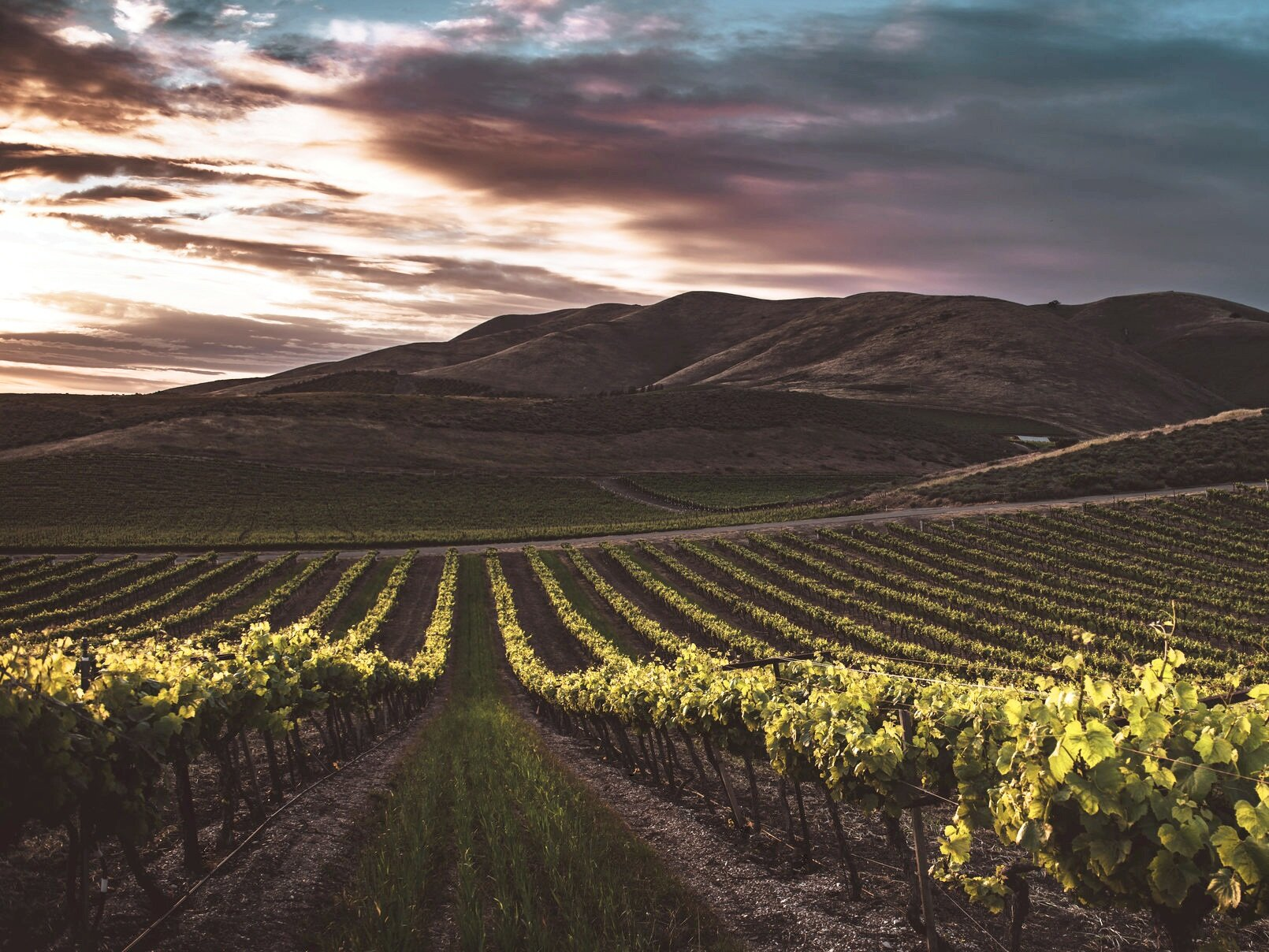 Paulo Pinto: Founding Member's view on Fine Wine Investment