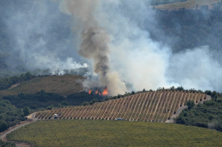 How winemakers are coping with wildfires – and smoke taint