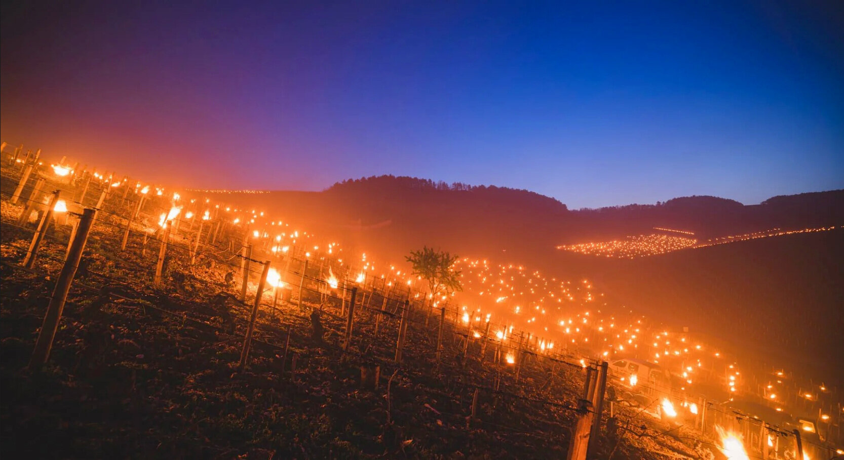 What's ahead for French wine 2021 vintages after the frosts?